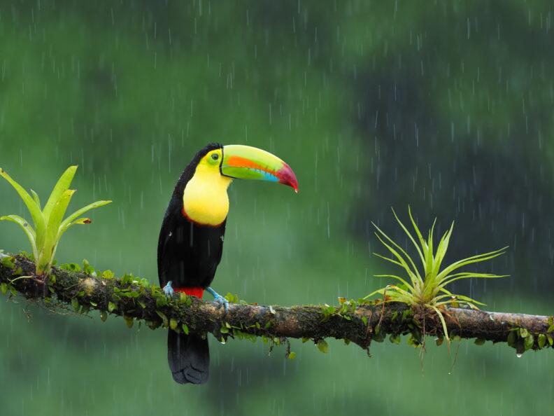 cool bird sitting on a branch